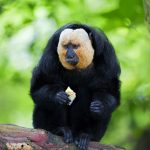 Today's Video of the Day from Aalto University describes how screen time improves the lives of saki monkeys in captivity.