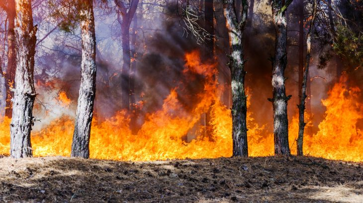 The team analyzed ten years of data and found that repeated fires are driving long-term changes to tree communities and causing population declines.