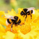 In a new study from York University, experts have investigated the social lives of bees on a molecular level.