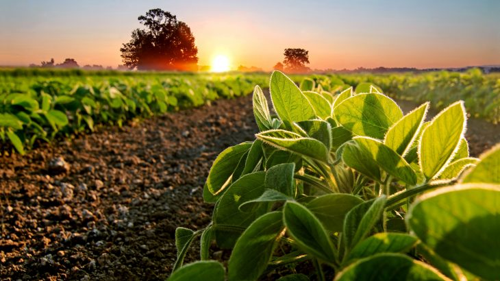 Plants set their circadian clock in the evening to make sure they have enough energy to make it through the night, according to a new study from the University of York