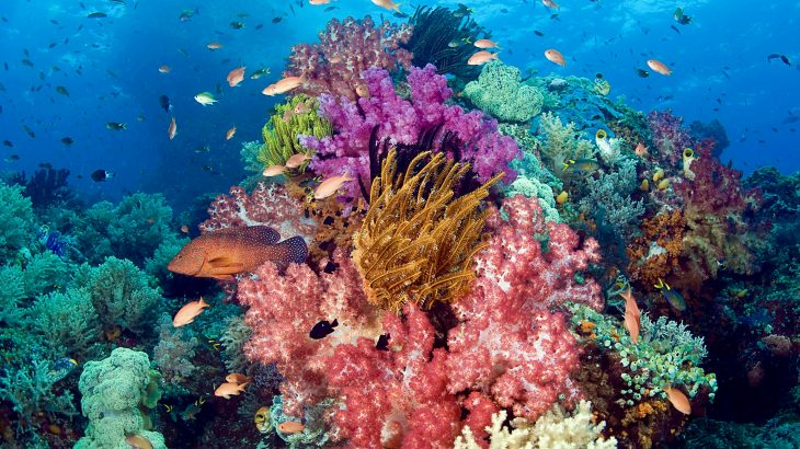Scientists at the ARC Centre of Excellence for Coral Reef Studies have conducted the first investigation into how many corals there are