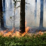 The researchers have found that the fine particles in wildfire smoke are several times more harmful to human respiratory health than particulate matter from other sources of air pollution