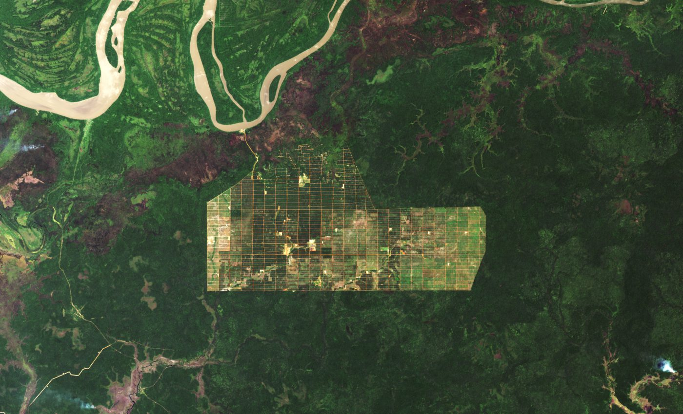 Today's Image of the Day from NASA Earth Observatory shows deforestation on the island of New Guinea in southern Papua province
