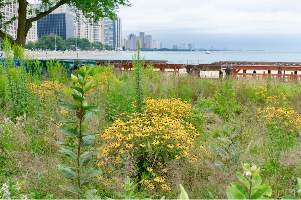 Urban areas are surprisingly useful for many at-risk species who take advantage of low-quality habitats in order to reach high-quality habitats quickly.