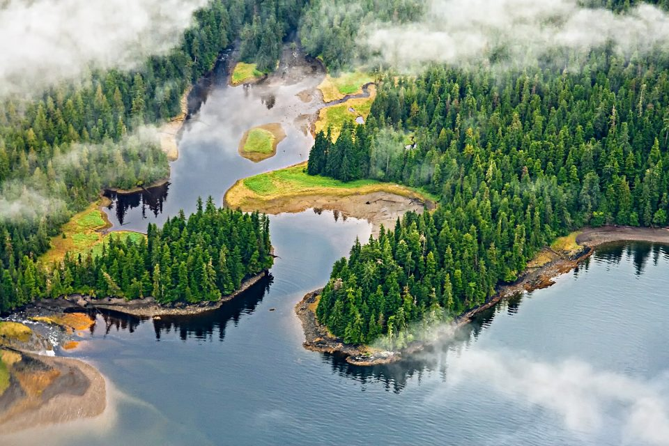 Climate change is triggering harmful ecological changes in North America's largest temperate rainforest