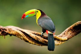 Rare birds are being pushed out of their habitats in Colombia, which is home to more bird species than any other place on the planet.