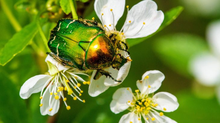 In the first study of its kind, an international team of scientists led by the University of Reading has investigated insect pollinator stability over multiple years and sites worldwide