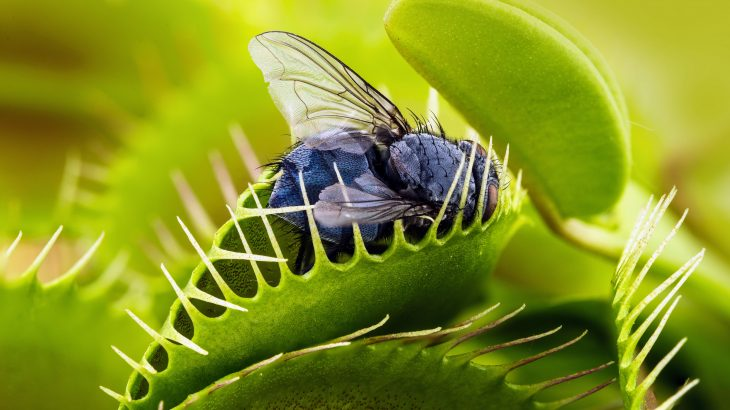 A study from the Salk Institute is providing brand new insight into how Venus flytraps and other plants sense touch.