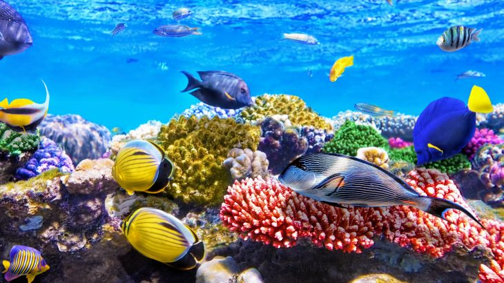 Coral reefs may rely on poop from their predators, according to a surprising new study from Rice University