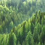The researchers found that younger trees take up and release less water than mature trees that are ten years or older.