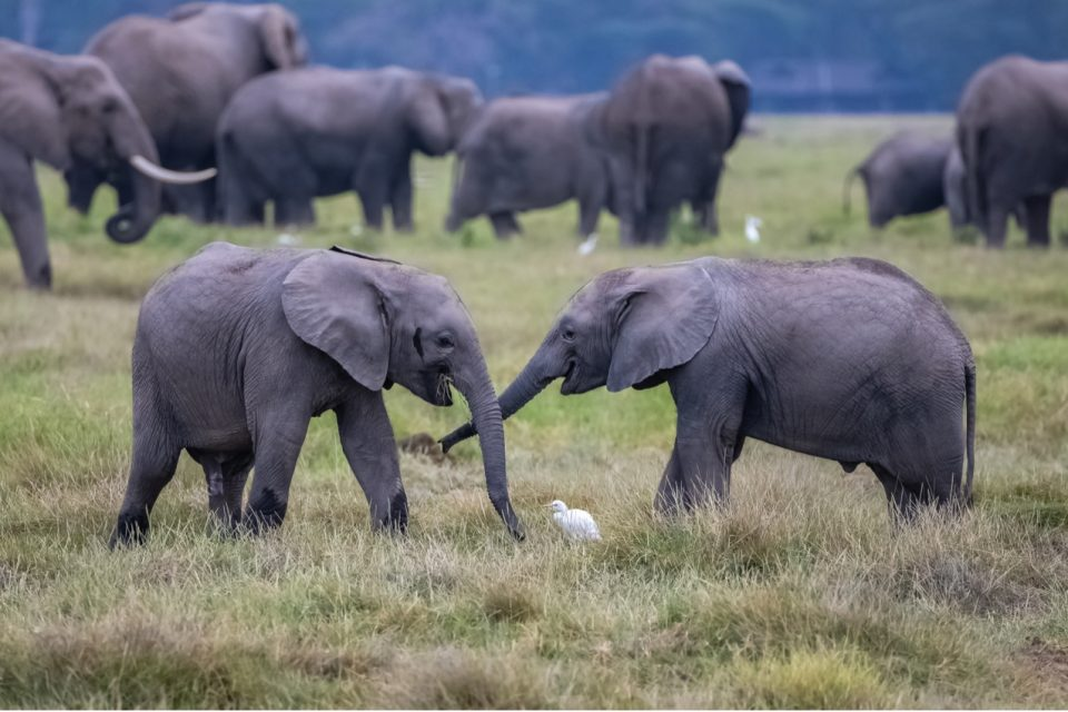 The scientists argue that natural selection favors complex social structures and relationships in long-lived animals.