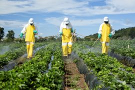 Despite claims that the negative impacts of pesticides are declining, researchers have discovered that the chemicals have become even more damaging over the past 25 years.