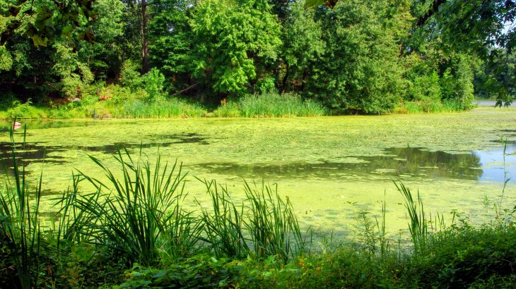 For the first time, scientists have detected the presence of anatoxin-a (ATX) in the atmosphere near a pond in Massachusetts with large algae blooms