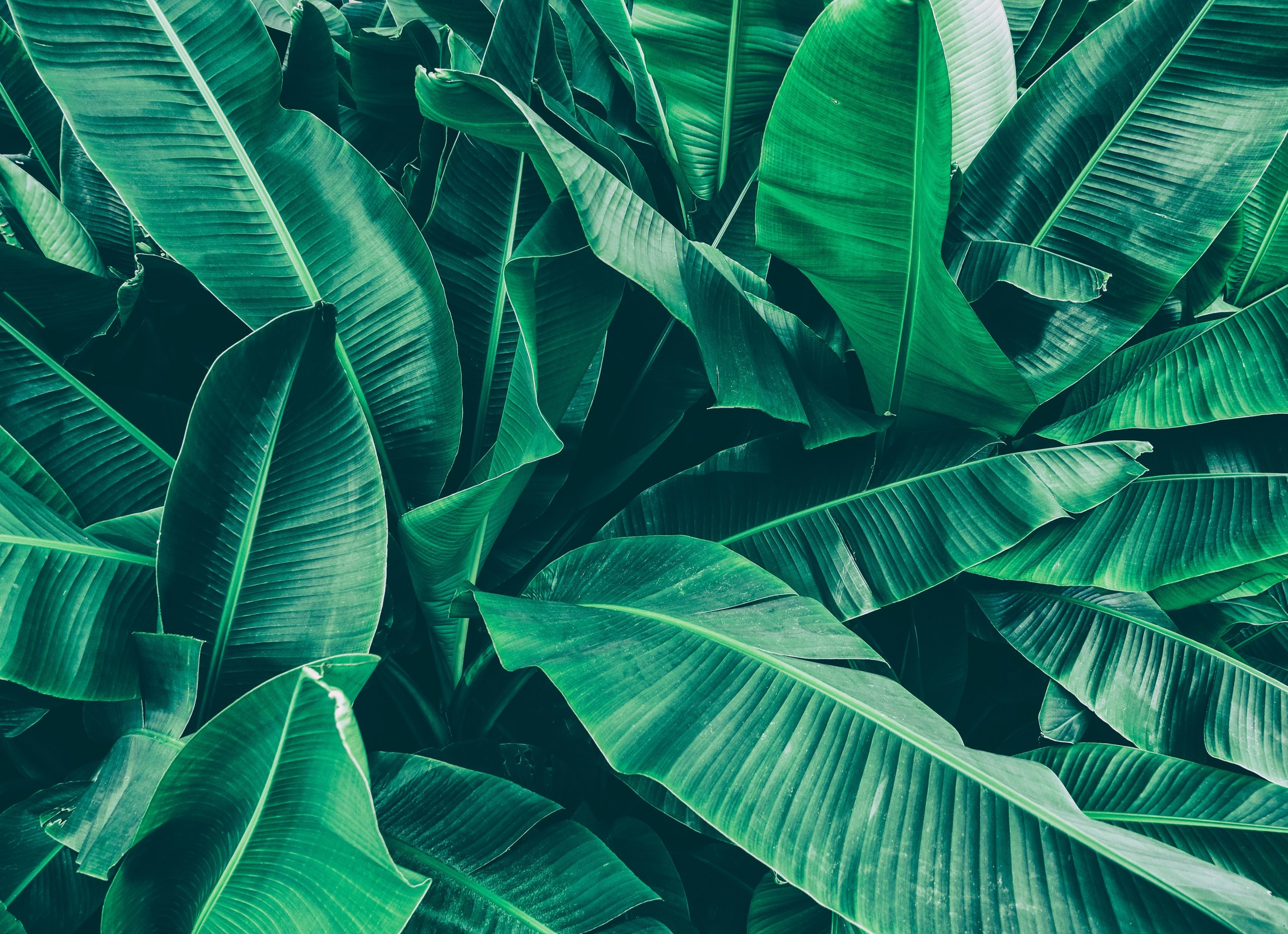 Tropical trees with thick leaves can thrive in higher CO2 conditions • Earth.com