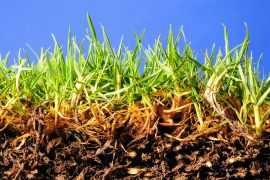 In a new study from the Boyce Thompson Institute (BTI), experts have identified a group of bacteria that appear to help fungi and their host plants gain access to soil nutrients