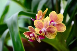 According to the researchers, this series of events paved the way for flowering plants to become dominant in tropical rainforests.
