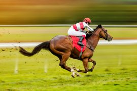 In a new study published by Frontiers, experts have discovered that bacteria in the gut of a horse communicate with cells to promote energy efficiency