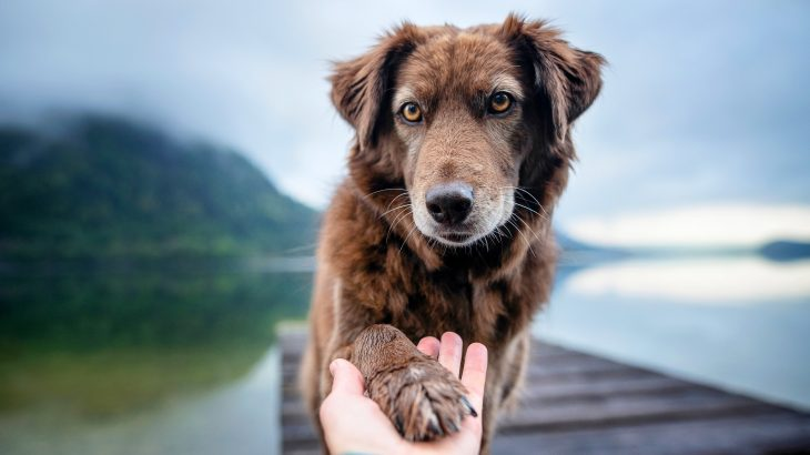 Dogs get jealous at the mere thought of competition for their owner's affection, according to a new study from the Association for Psychological Science.