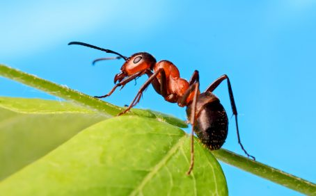 Ants respond to social isolation in similar ways as humans and other mammals, according to a new study.