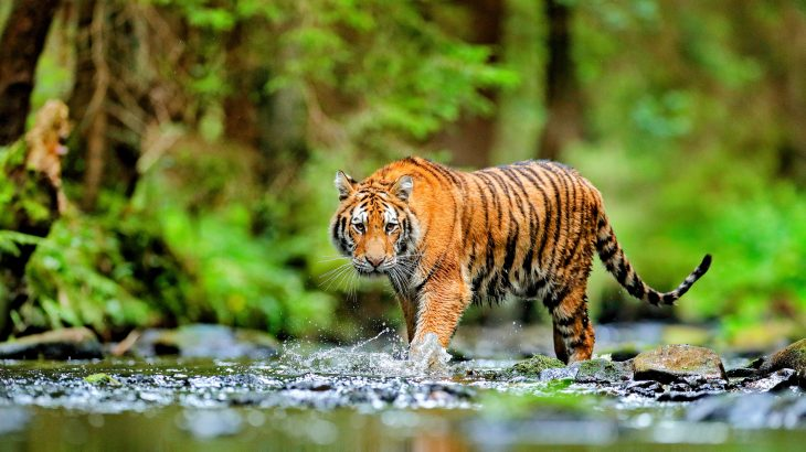 Crop and timber production are two of the biggest drivers of declining wildlife populations, and collectively contribute 40 percent of the overall extinction risk of mammals, birds, and amphibians.