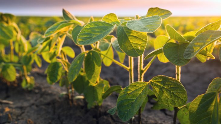 In a new study published by Frontiers, experts have determined that adding beans and other legumes to crop rotations could be key to more sustainable and nutritious food production.
