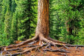 When trees die in drought conditions, the underlying cause is a rapid collapse in the hydraulic system, according to a new study