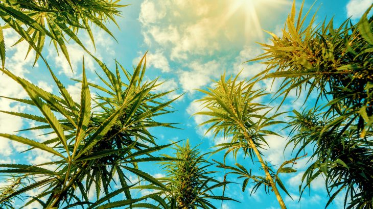 In a new study from the University of Granada, experts have shown that smoking cannabis significantly impairs vision in more ways than one