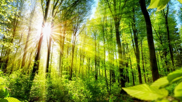 Scientists led by Michigan State University have evaluated the efficiency of more than 50,000 protected areas (PAs) worldwide in preventing forest loss.