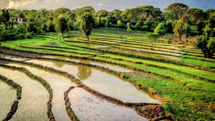 At the current rate of global warming, India's monsoon rainfall will become more intense and less predictable.
