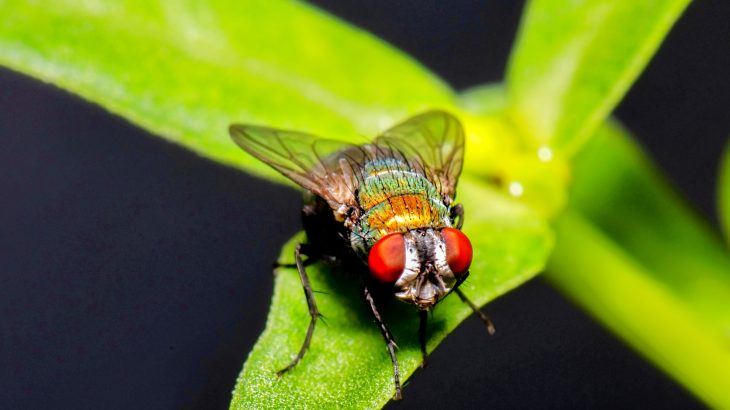 Blow flies could provide scientists with a non-invasive way to monitor the environment and important changes within ecosystems