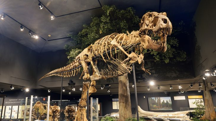A new study estimates that a total of 2.5 billion Tyrannosaurus rexes lived and died before the species went extinct.