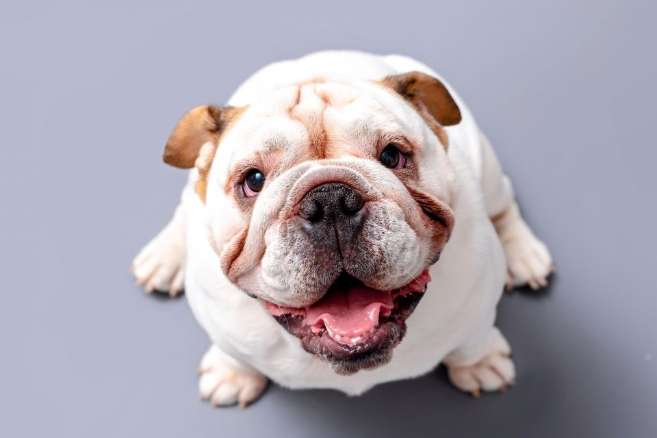 A new study from the ELTE Faculty of Science has identified four independent traits that influence a dog's ability to form eye contact.