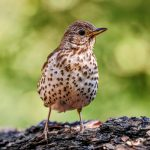 The researchers found that migratory thrushes were using flight calls much more frequently over brightly lit urban areas.