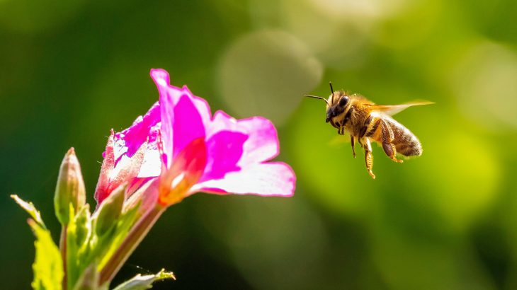 Scientists have discovered a hotspot of bee diversity in the protected Chihuahuan Desert along the United States-Mexico border.