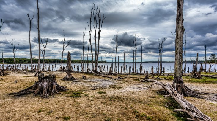 The researchers explained that these emissions must be accounted for when estimating the environmental impact of ghost forests.
