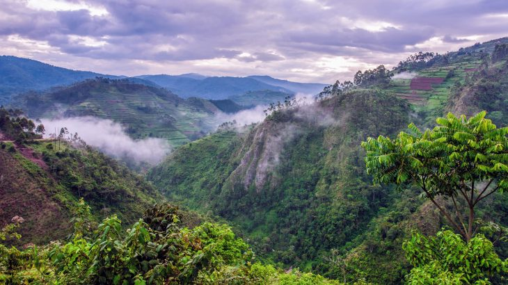 The study revealed that African rainforests continued to remove carbon from the atmosphere despite the extreme heat and drought of the last major El Niño event.