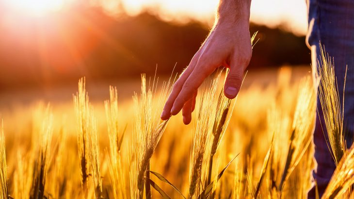 a team of researchers led by the University of Nottingham analyzed thousands of cereal grains and soils to test their nutritional value