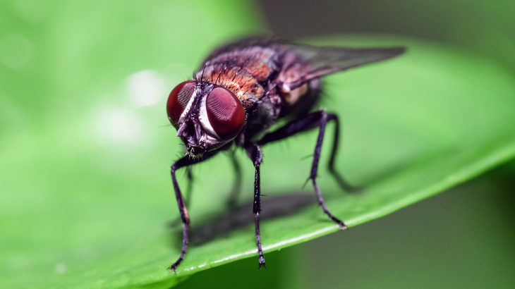 In a new study published by Frontiers, experts have discovered a flower that emits the smell of decomposing insects to imprison coffin flies.