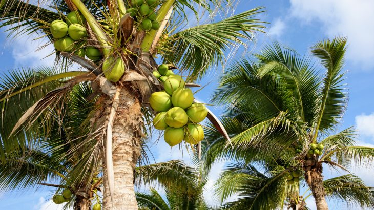 In a new study from the Microbiology Society, researchers are describing a previously unknown type of bacteria that causes a fatal wilt disease in palms.