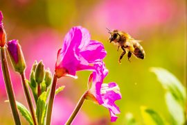 In a new study from Cornell University, experts have developed an antidote to protects bees from deadly insecticides, which cause beekeepers to lose around a third of their hives