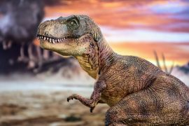 A new study from UC Berkeley reveals that young tyrannosaurs practiced their biting and strengthened their jaws before their adult teeth came in