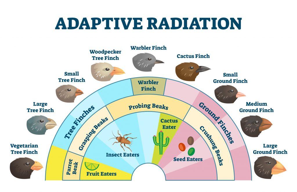 galapagos radiation