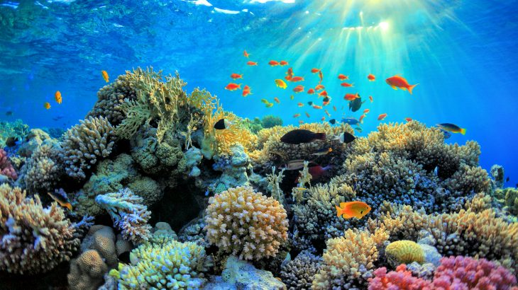 Despite being one of the most valuable types of ecosystem on the planet, coral reefs are declining at an alarming rate.