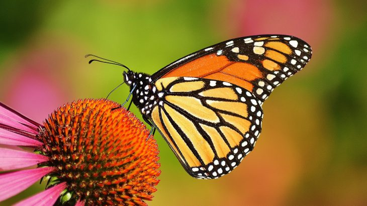Butterflies and moths are resorting to drastic measures to cope with climate change.