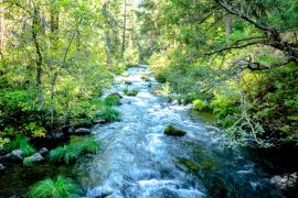Rare plant species living in streamside forests can benefit from water that humans are diverting for their own needs, but these benefits are only short term