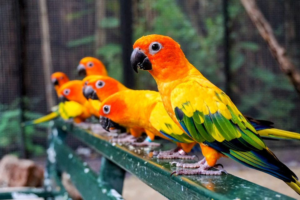Parrots are known for their remarkable ability to imitate, and they even replicate the signaling calls of other individuals during vocal interactions.