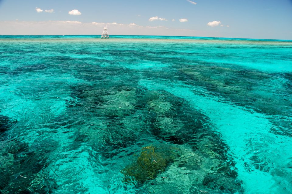 Florida's coral reefs are a rare example of coral in North America and are home to spiny lobster, snapper and grouper.