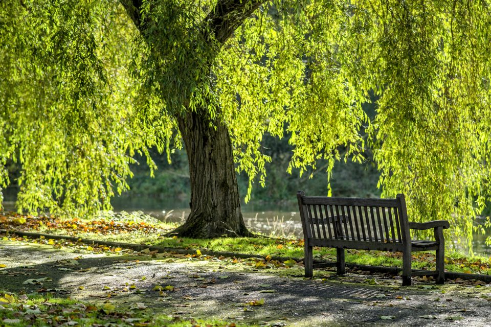 However, other factors may also be at play when it comes to transmission of viruses like the one that causes COVID-19, including tree pollen.