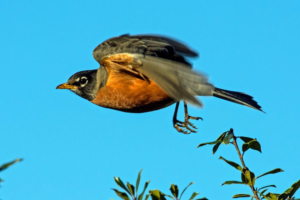 A bird's navigational prowess can be at least partially attributed to their ability to sense Earth's magnetic field.