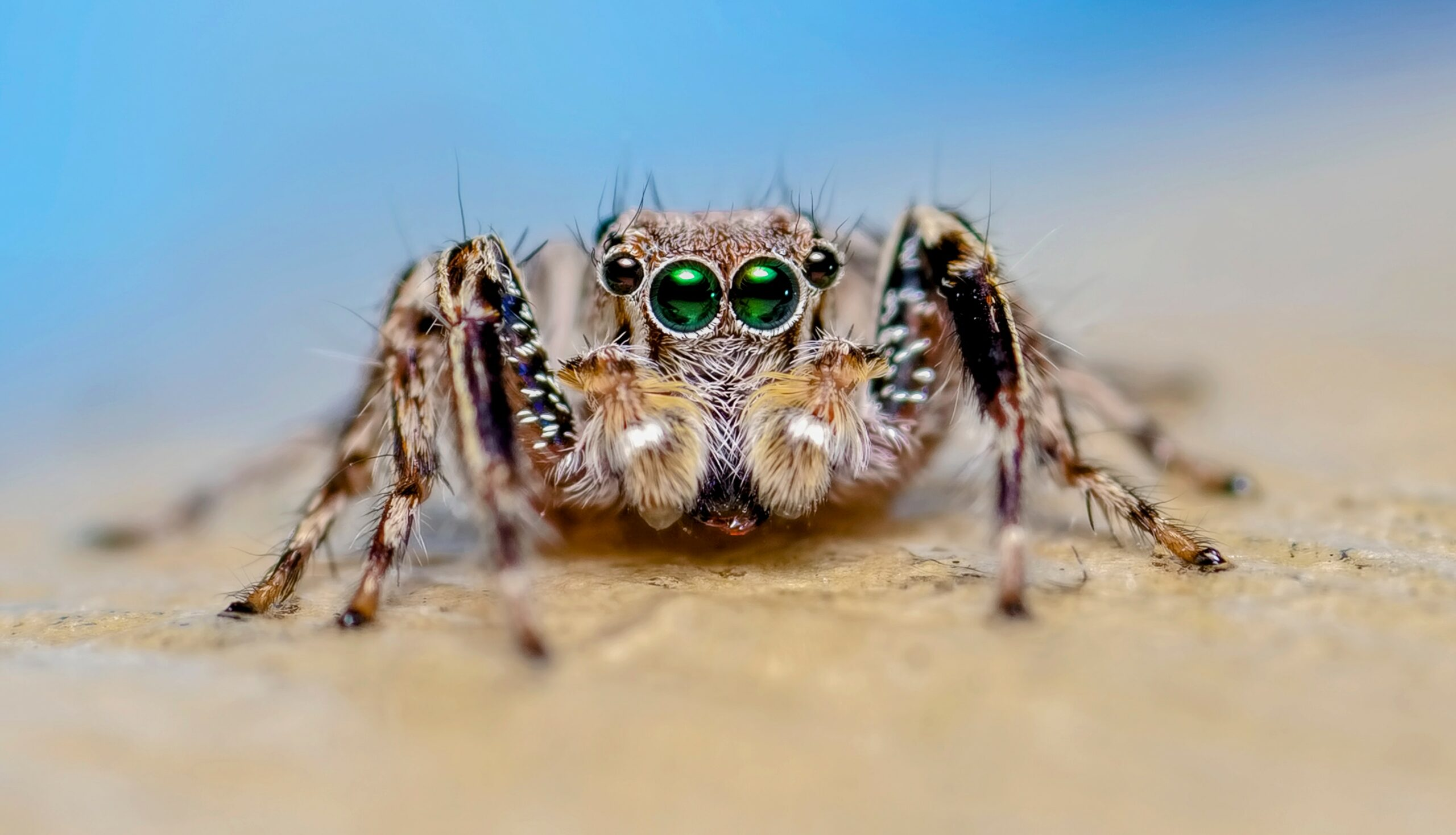 Jumping spiders know the difference between animals and objects • Earth.com - Earth.com